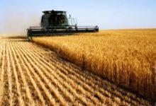 Photo of Akhannouch: Actualmente, la producción de cereales es de 5,7 millones de quintales