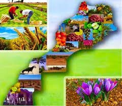 Photo de Impacto de la COVID-19 en el sector agrícola en Marruecos (*)  PRIMERA PARTE