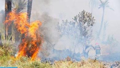 Photo of M'diq-Fnideq: continúan los esfuerzos para controlar un incendio forestal