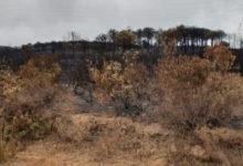 Photo of M'diq-Fnideq: controlado el incendio forestal tras devastar más de 1.020 hectáreas